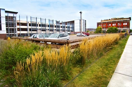 Best Parking Lot Greening