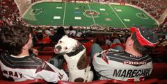 Fans with Dog in stands