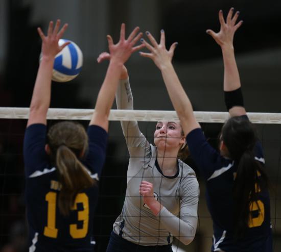volleyball north sydney - photo#22