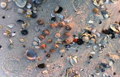 Beach House Retreats on LBI, NJ Shells