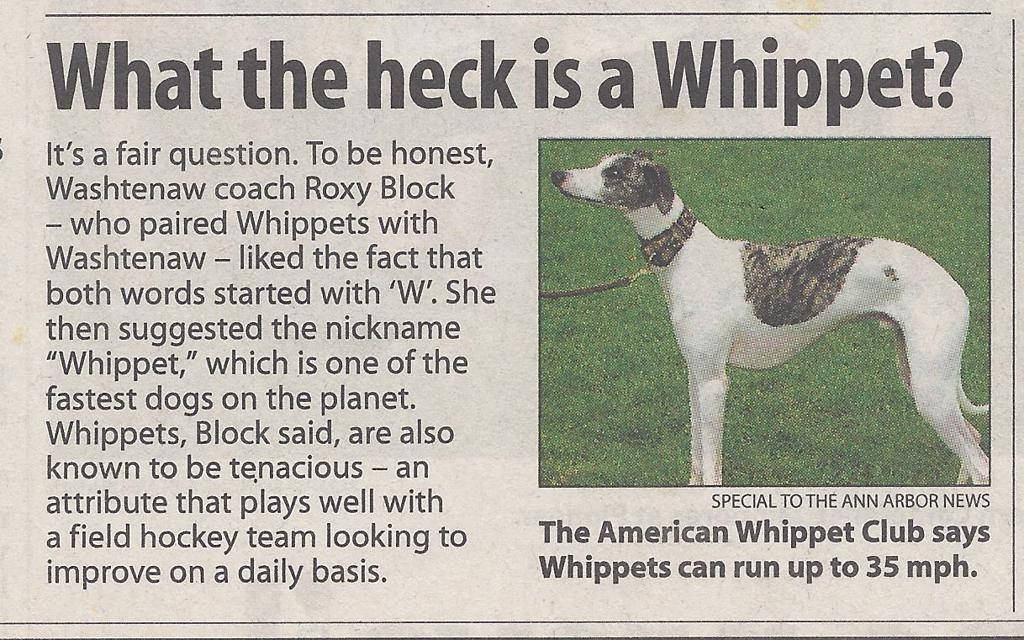 What is a Whippet - Ann Arbor News
