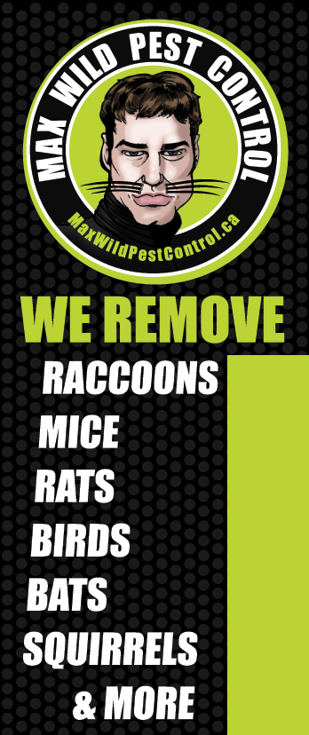 Max Wild Pest Control and human animal removal in mississauga and hamilton region. Remove bats from your attic. Remove Mice from your basement. Raccoon removal from your chimney. Max Wild Skunk Removal. Mississauga Pest Control Company