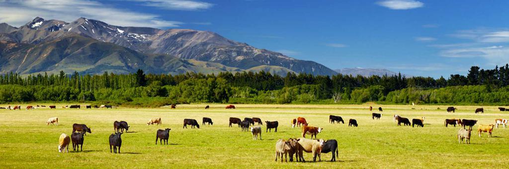 70.3 Calgary pasture
