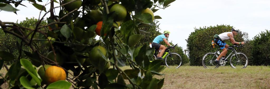 Triathletes biking near fruit trees, IRONMAN Florida 70.3 course